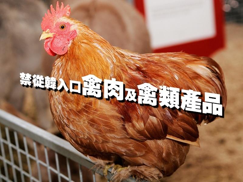 【親子頭條】禁從韓入口禽肉及禽類產品