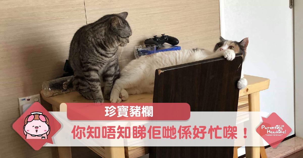 【珍寶豬欄】你知唔知睇佢哋係好忙㗎!