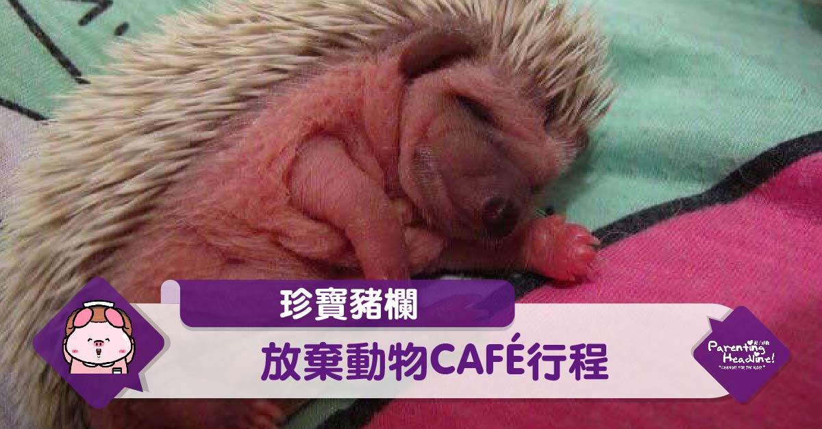 【珍寶豬欄】放棄動物CAFÉ行程